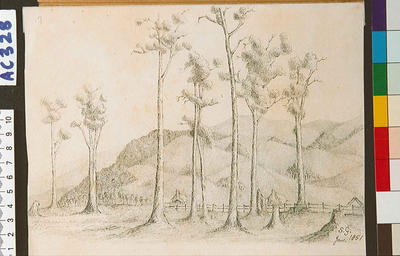 A sketch in the Riwaka Valley