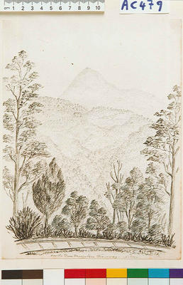 On the Dun Mountain Tramway, Nelson
