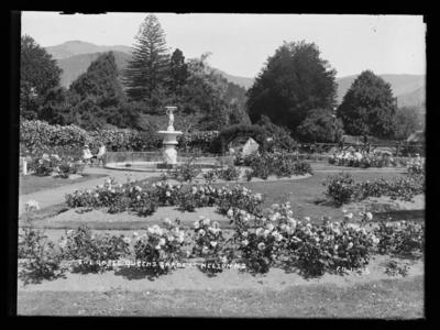 The Roses Queens Gardens Nelson. N.Z.