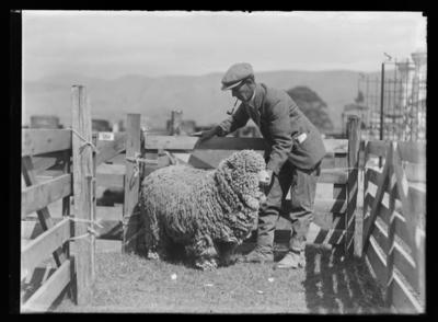 Agricultural and Pastoral Show 1930