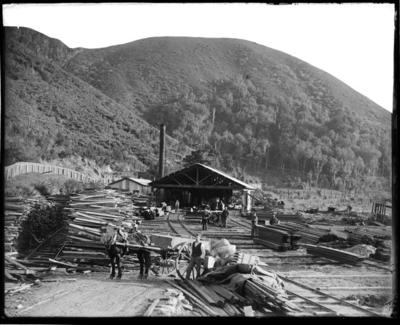 Brownlee's Timber Mill, Havelock