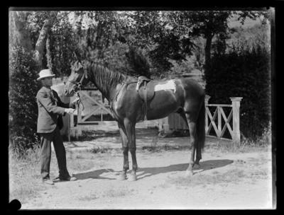 Moore's horse