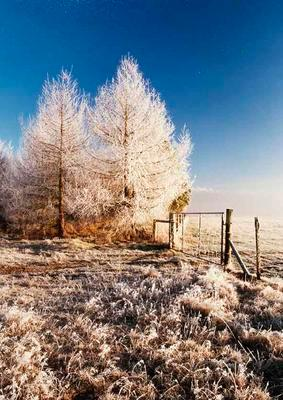 Frost in the Buller River valley