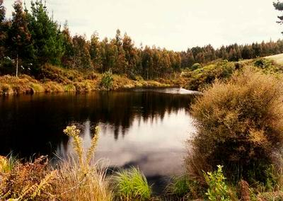 Pond in Moutere