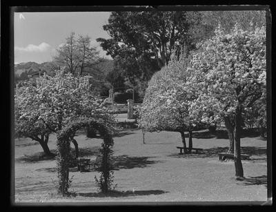 Nelson College for Girls, blossom trees