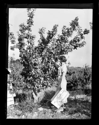 Horticulture, woman