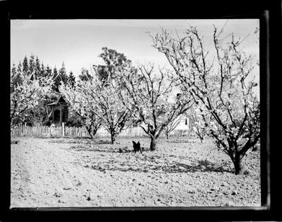 Horticulture, orchard