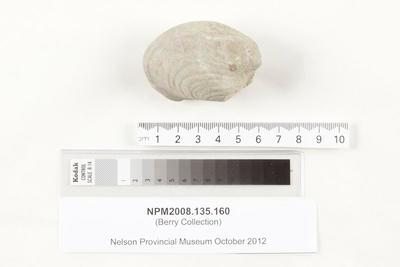 Fossil shell